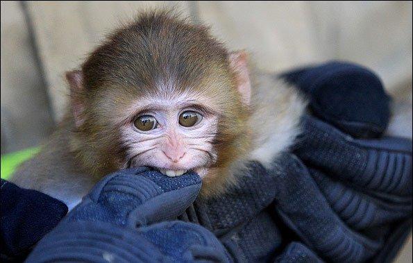 بچه میمون گرسنه و بچه شیرهای سرگردان در تهران؛بازار شایعه و جوک