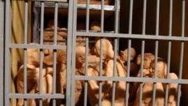 مستند انفرادی، بخش چهارم: سلول های انفرادی با بیش از ۲۰ زندانی